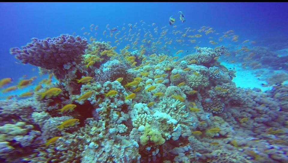 importance of marine pollution
