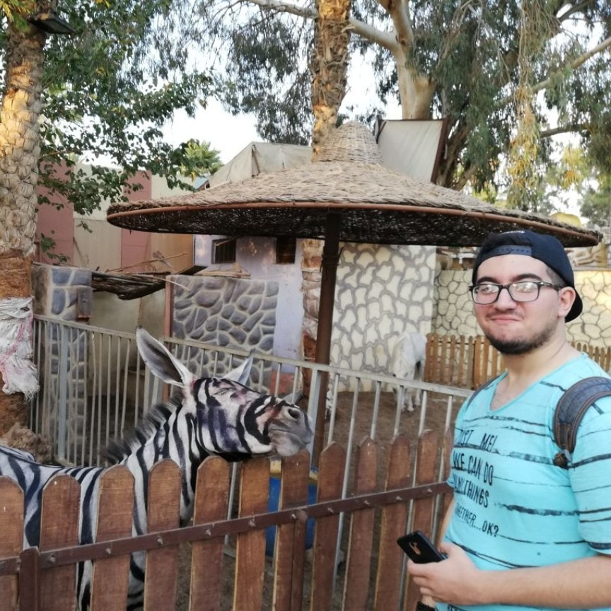 468178459153f Egypt s Central Administration of Zoos denies Donkeys were painted as Zebras
