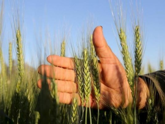 Egypt S Food Deficit Is Increasing Minister Of Agriculture Egypt Independent