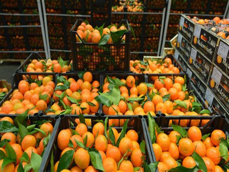Egyptian agricultural exports successfully penetrate new