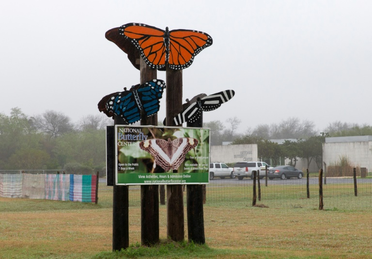 US judge rules against butterfly sanctuary opposed to Trump's wall