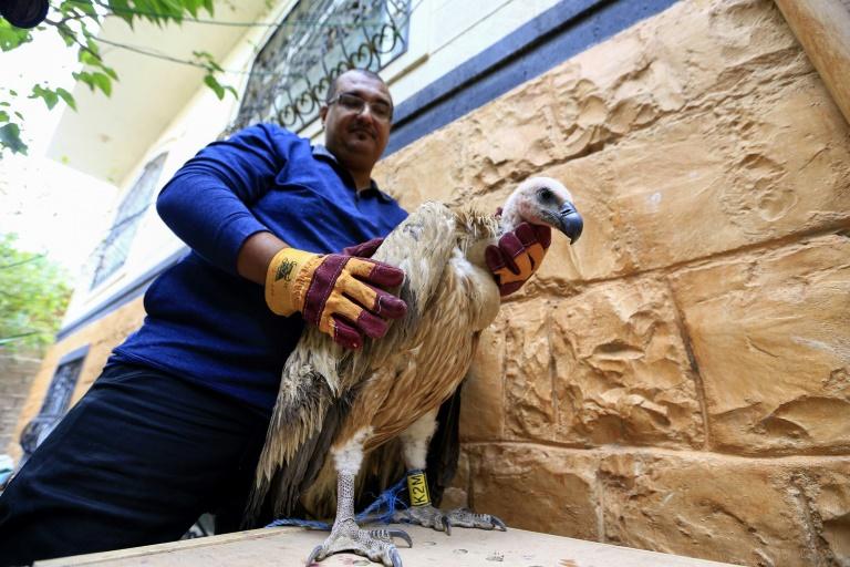 'Spy vulture' held in war-torn Yemen