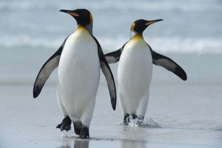 58e336b26ee69cbfb21d906c57b8ac8f9cb53bdf - Menumpuk di Pulau Ini, Kotoran Penguin Bisa Menghasilkan Gas Tertawa