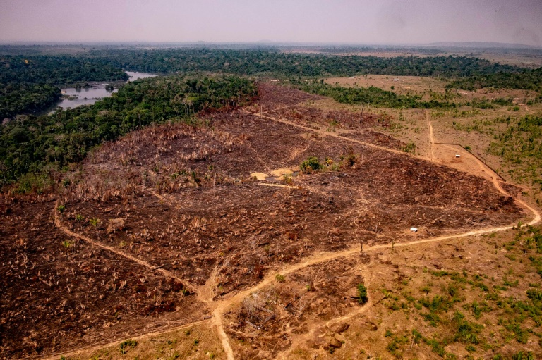 Brazil Under Fire As Amazon Burning Is Connected to Soy and Beef Exports