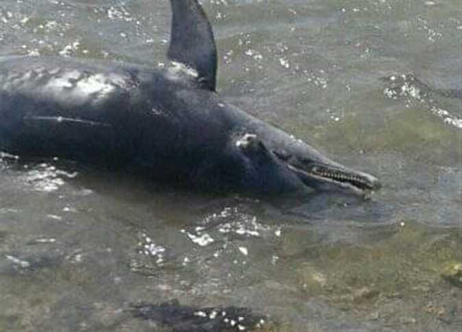Eleven Dead Dolphins Wash Up On Marsa Alam Beach Egypt Independent